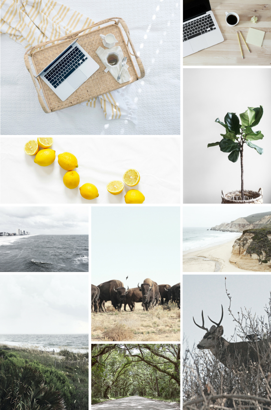 Curated Free Stock Photos