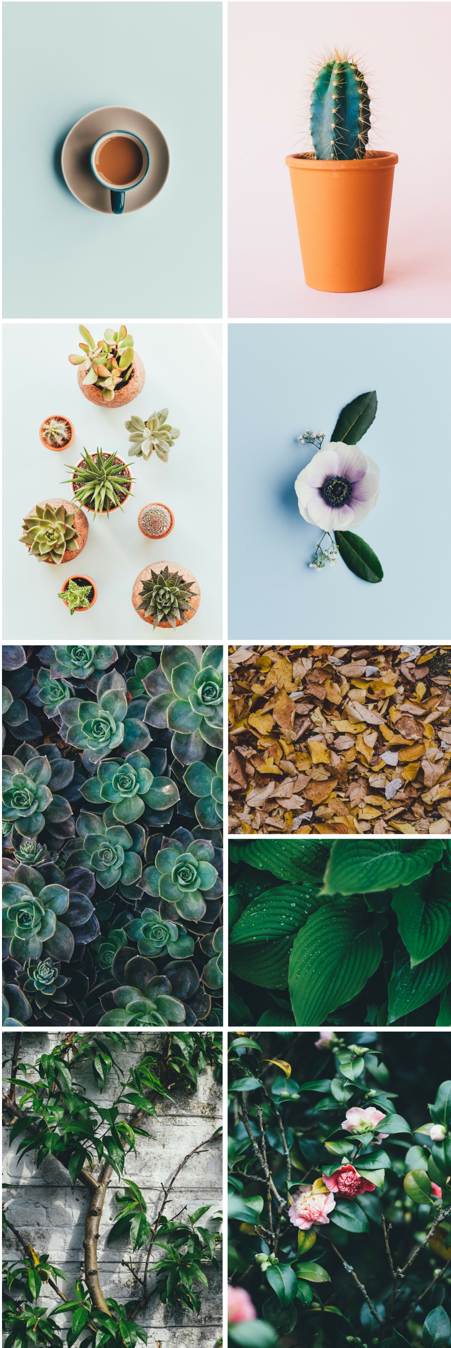 Curated Free Stock Photos Vol 02