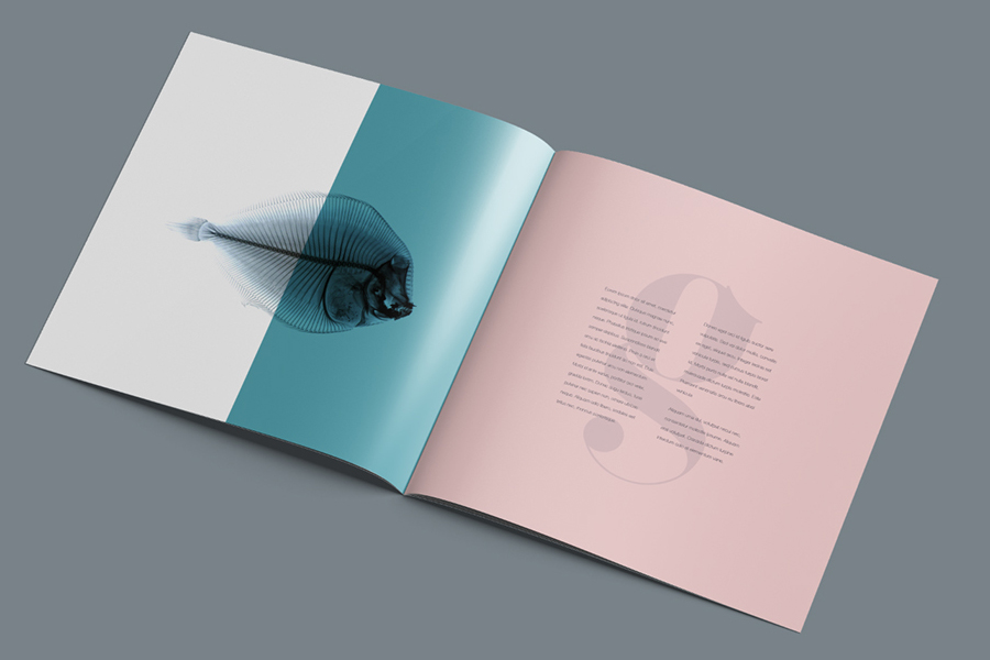 brochure mock up template - square brochure mockup free design resources