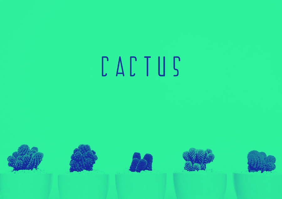 Cactus Display Free Typeface