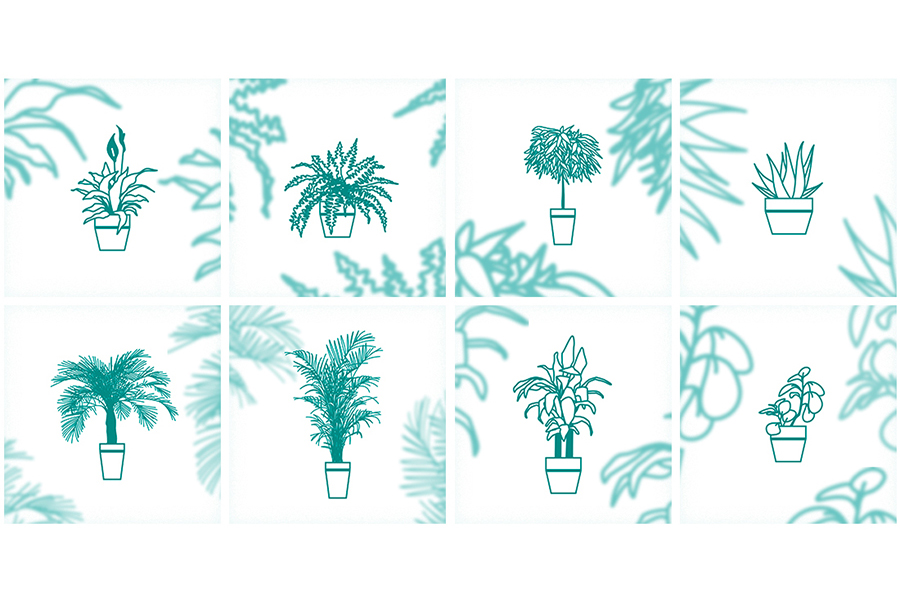 8 Houseplant Vector Icons