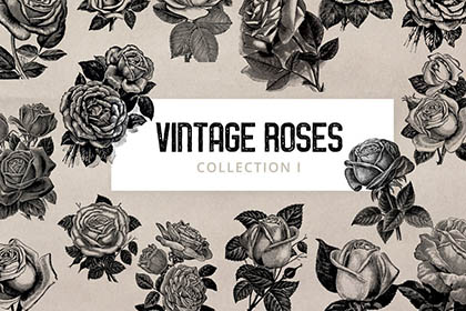 Free Vintage Roses Illustration