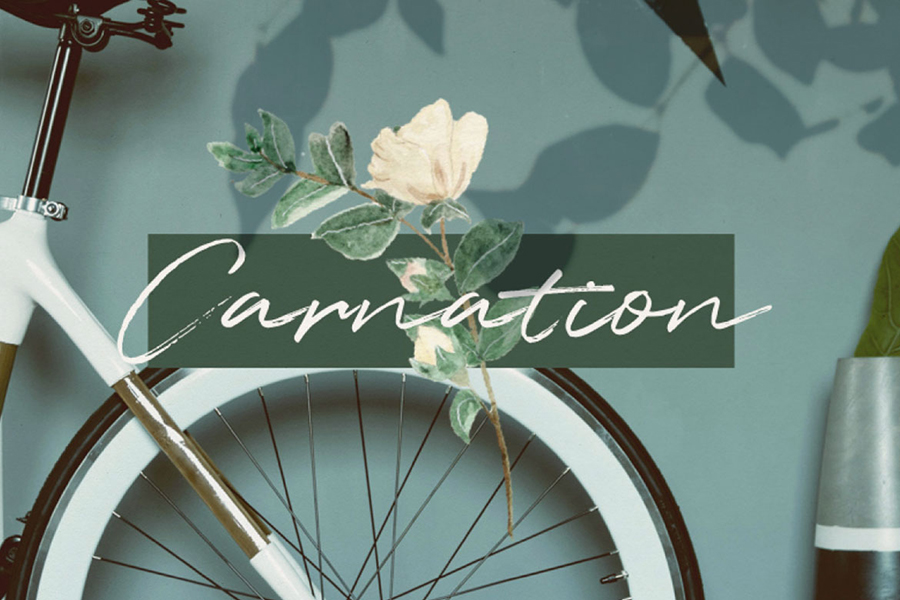 Carnation Presentation Template