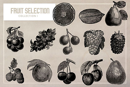 Fruit Selection Illustration