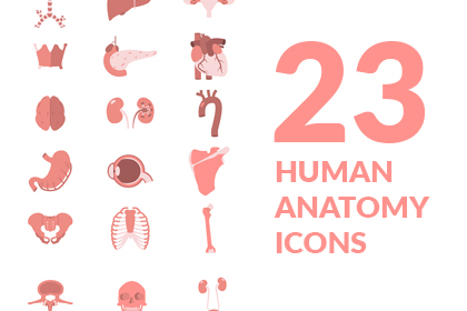 23 Human Anatomy Icons