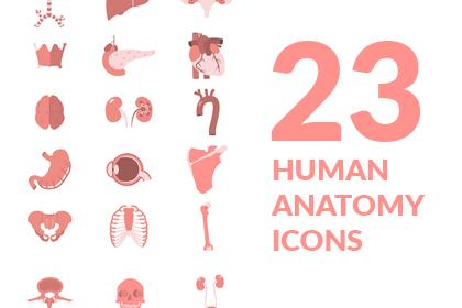 23 Human Anatomy Icons